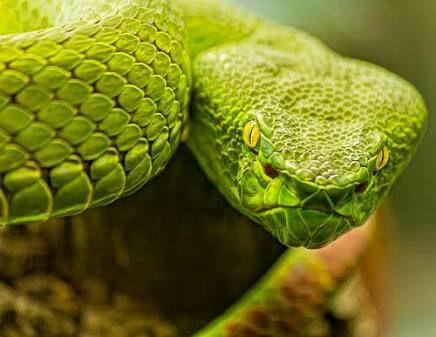 Que hacer en caso de ser mordido por una serpiente ?