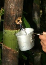 agua bamboo